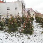 2017-12_Zdobeni-stromecku-Loretanske-namesti_01